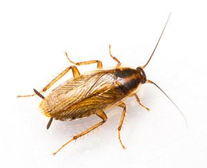 yellowjacket-wasp-5003752