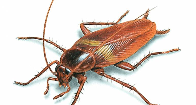 Power Pest Control Is Your First Line Of Defense Against Winter Cockroaches