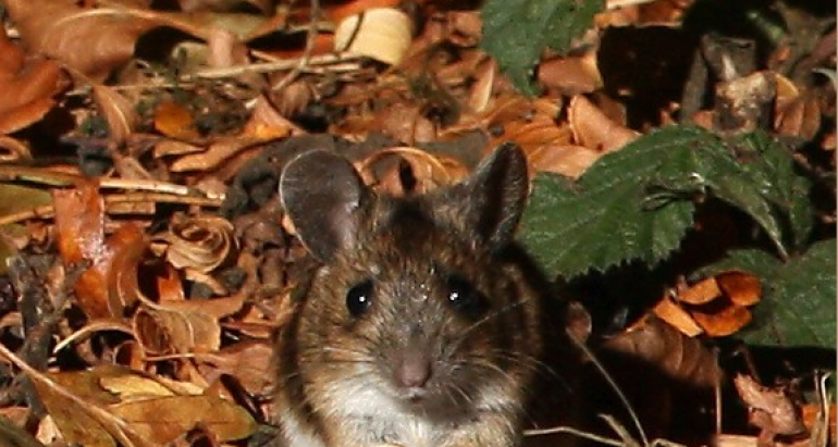 Mitigate Rodents in Your Backyard Before Fall