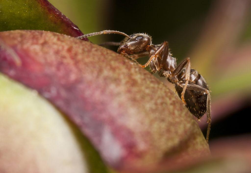 ant control toronto ant pest exterminator in gta