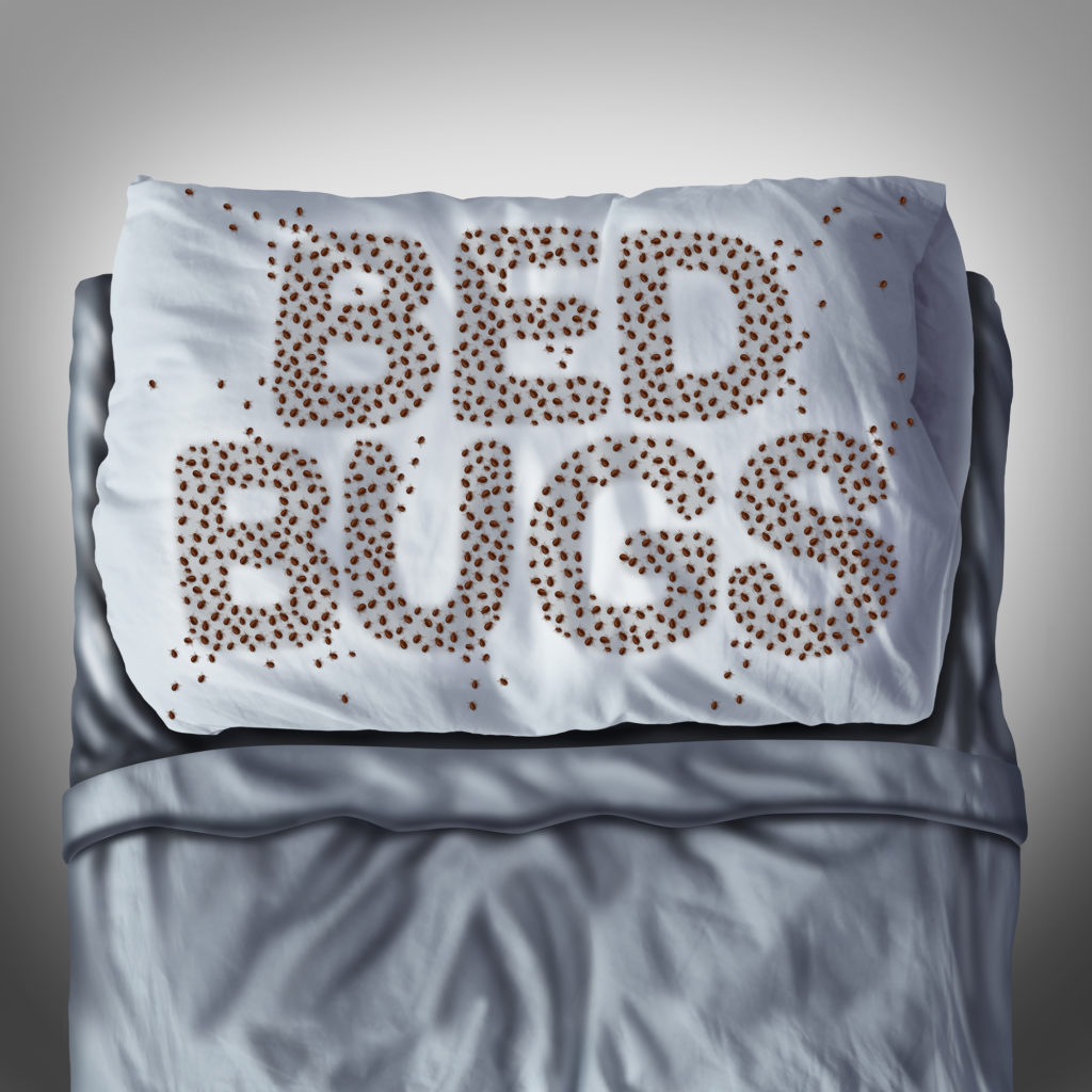 bed bugs problems Toronto