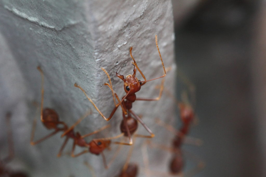 Top 5 Most Dangerous Ant Bites For Humans Power Pest Control