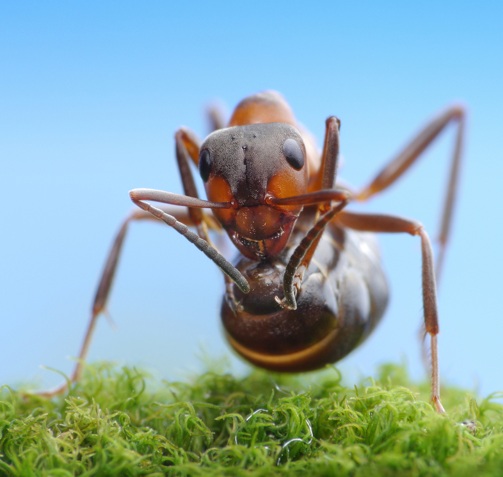 fire ant removal avoid a stinging end to good summer fun