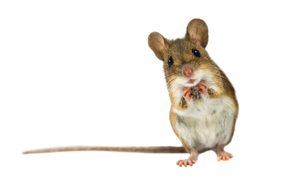 7 Creepy Ways Mice Get Into Your House And How To Get Them Out Power Pest Control